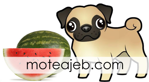 Watermelon Eat Strange A dog - هندوانه خوردن عجیب یک سگ + فیلم