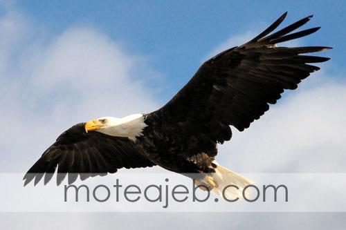 World of sight an eagle - دنیا از دید یک عقاب