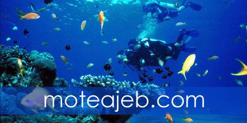 Best places in the world for diving 2 - بهترین مکان های دنیا برای غواصی