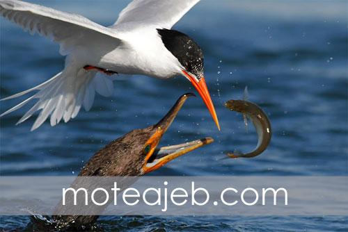 Odd pictures hunting birds in water 1 - عکس های عجیب شکار پرندگان در آب