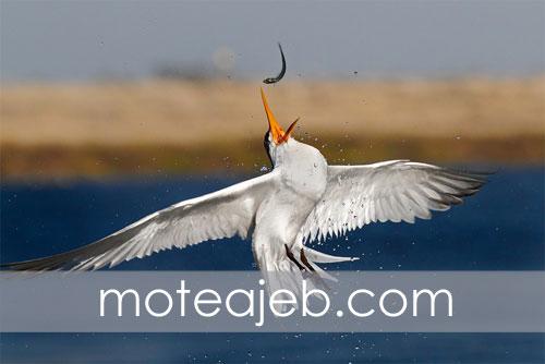 Odd pictures hunting birds in water 3 - عکس های عجیب شکار پرندگان در آب