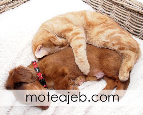 photos friends dog and cat 1 - عکس های دوستی سگ و گربه