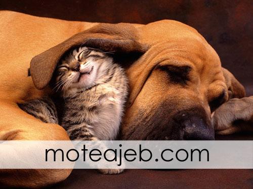photos friends dog and cat 2 - عکس های دوستی سگ و گربه