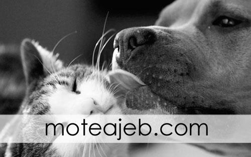 photos friends dog and cat 3 - عکس های دوستی سگ و گربه