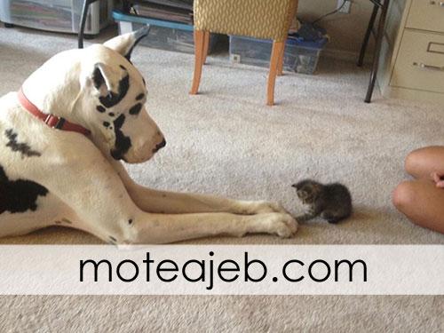 photos friends dog and cat 4 - عکس های دوستی سگ و گربه