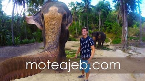 Rarely seen images of elephants 1 - تصاویر کمتر دیده شده از فیل ها
