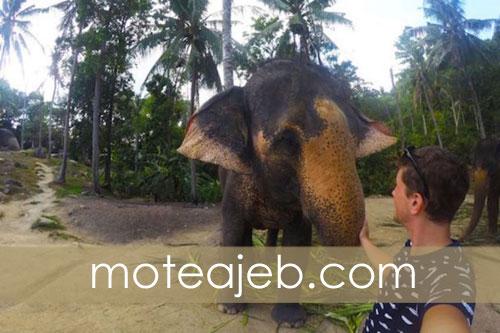 Rarely seen images of elephants 2 - تصاویر کمتر دیده شده از فیل ها