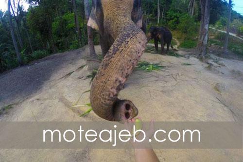 Rarely seen images of elephants - تصاویر کمتر دیده شده از فیل ها