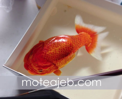 Three dimensional drawing of fish in water 1 - نقاشی سه بعدی ماهی ها در آب