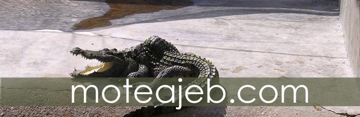Crocodile park in Qeshm Island 1 - پارک کروکودیل ها در جزیره قشم