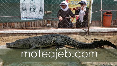Crocodile park in Qeshm Island 2 - پارک کروکودیل ها در جزیره قشم