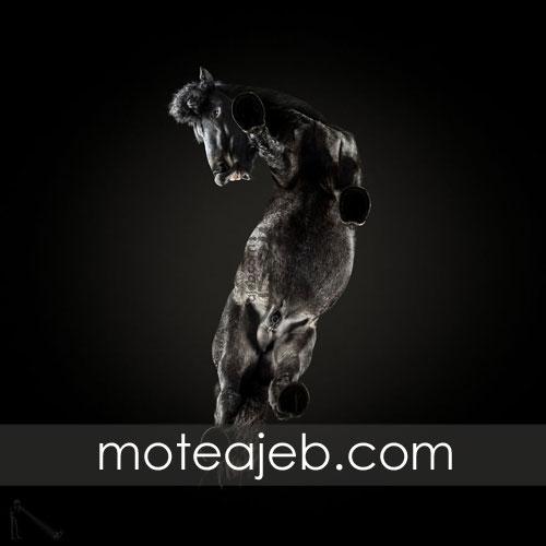 Seen pictures of horses 1 - تصاویر کمتر دیده شده از اسب ها