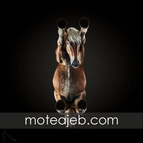 Seen pictures of horses 2 - تصاویر کمتر دیده شده از اسب ها