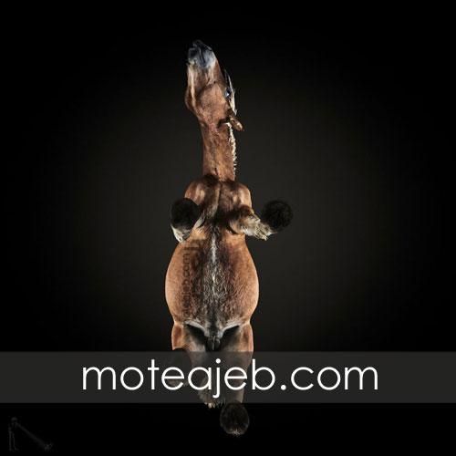 Seen pictures of horses 3 - تصاویر کمتر دیده شده از اسب ها