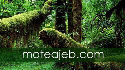 ویژگی های جنگل های آمازون (جهنم سبز)