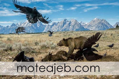 Best pictures taken from wildlife 1 - بهترین عکس های گرفته شده از حیات وحش