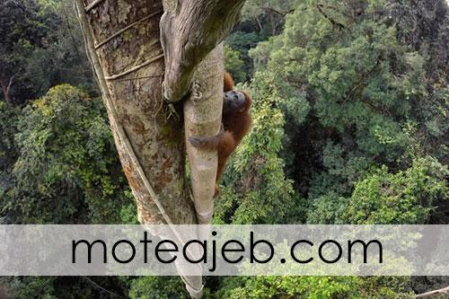 Best pictures taken from wildlife 2 - بهترین عکس های گرفته شده از حیات وحش