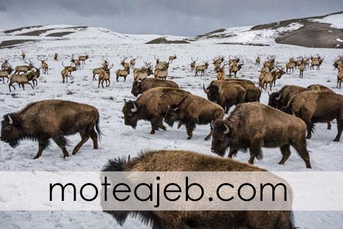 Best pictures taken from wildlife 3 - بهترین عکس های گرفته شده از حیات وحش