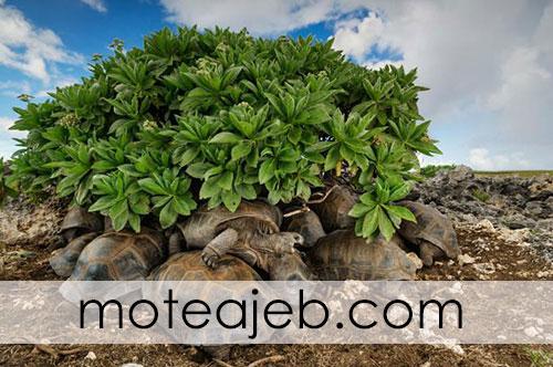 Best pictures taken from wildlife 4 - بهترین عکس های گرفته شده از حیات وحش