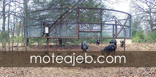 Strange trap for animal trapping - تله ای عجیب برای به دام انداختن حیوانات