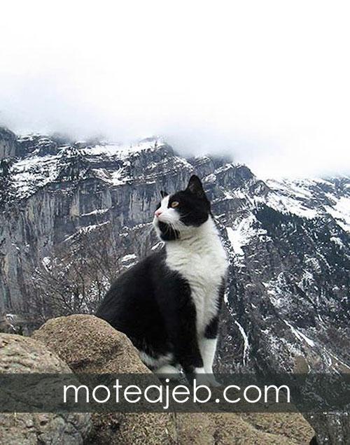 گربه ی عجیب و مهربان