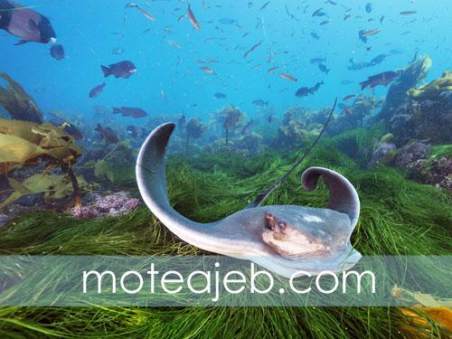 Strange images of Deep Sea 2 - تصاویر عجیب از اعماق دریا