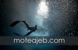تصویر فوق العاده از اعماق دریا در هنگام غواصی