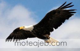 دنیا از دید یک عقاب