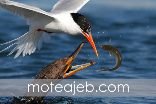 Odd-pictures-hunting-birds-in-water-1