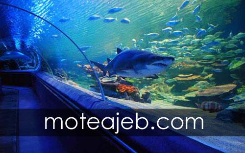 دنیای عجیب زیر آب در استانبول