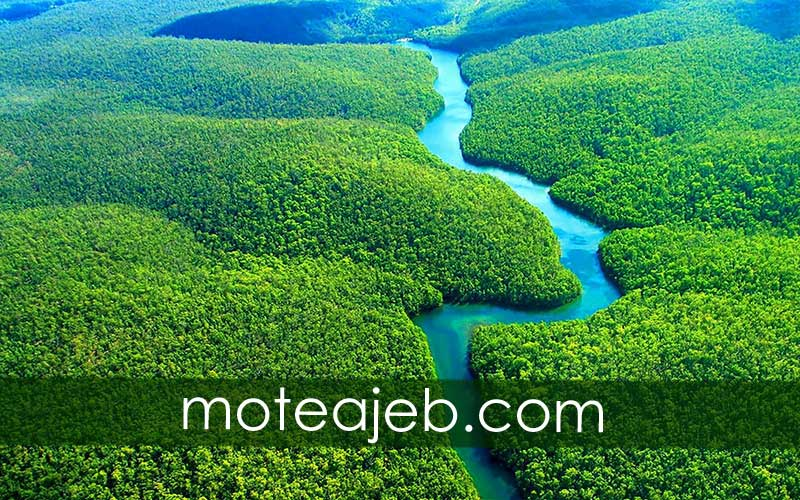 Features-of-the-Amazon-jungle-(Green-Hell)
