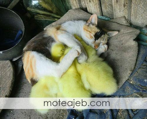 گربه های زیبا و دوست داشتنی