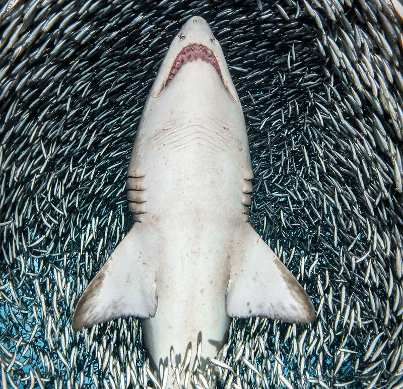Superb-images-of-deep-sea