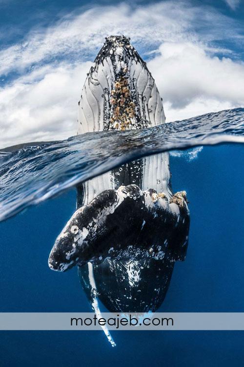 تصاویر فوق العاده از اعماق دریا