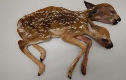 چندمورد از عجیب ترین موارد پزشکی در دنیای حیوانات