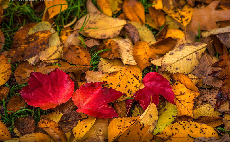 تجربه پاییز عاشقانه در زیباترین شهر جهان در فصل پاییز