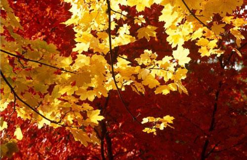 پاییز رویایی در طبیعت بریتانیا