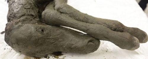 کشف اسبی از عصر یخبندان (عکس)