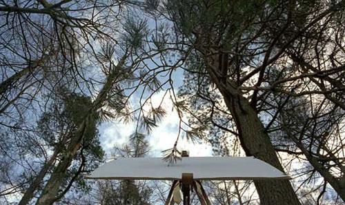 درخت های نقاش (عکس)