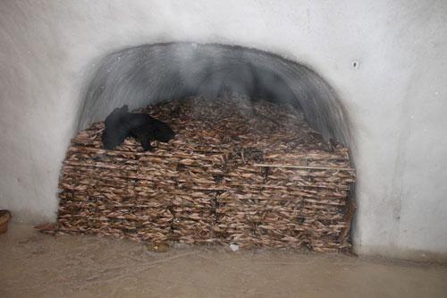 تصاویری ترسناک از سردخانه های طبیعی در سیبری